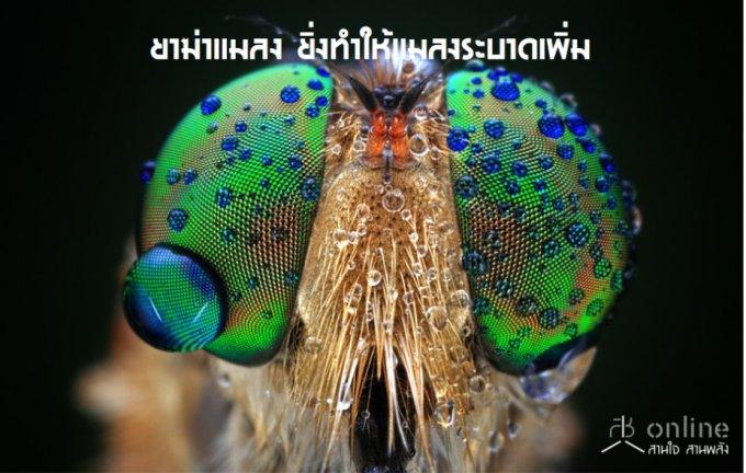 ยาฆ่าแมลง ยิ่งทำให้แมลงระบาดเพิ่ม
